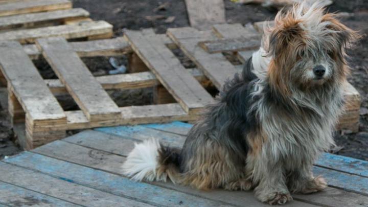 «Подвешивали на тросе»: живодерам из Каргополья дали два года исправительных работ за гибель собаки