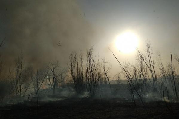Граждан просят не поджигать сухую траву