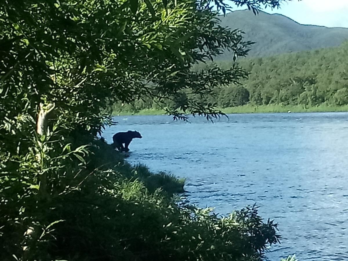 Медведи подходили так близко к лагерю, что их можно было сфотографировать даже на телефон