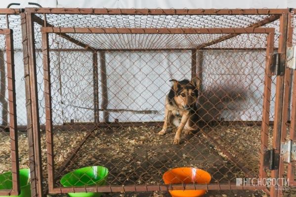 Сейчас на отлов и содержание одной собаки выделено 4800 рублей