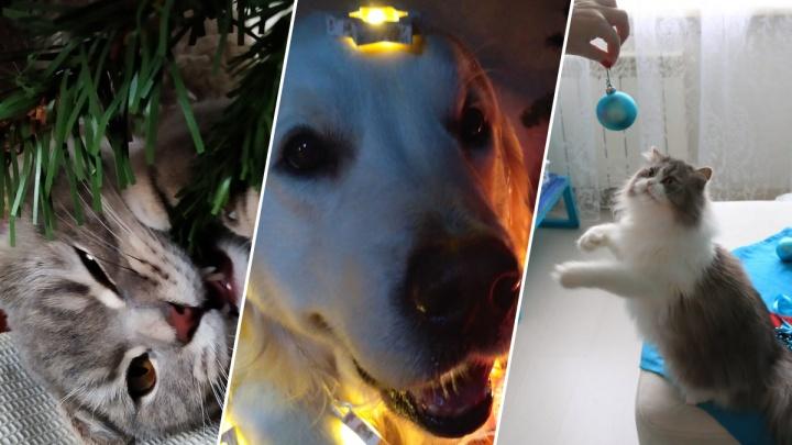 Кусь ёлку: разглядываем самых новогодних животных Новосибирска