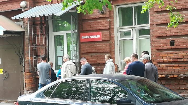 Какие общественные места в Ярославле обработали от клещей