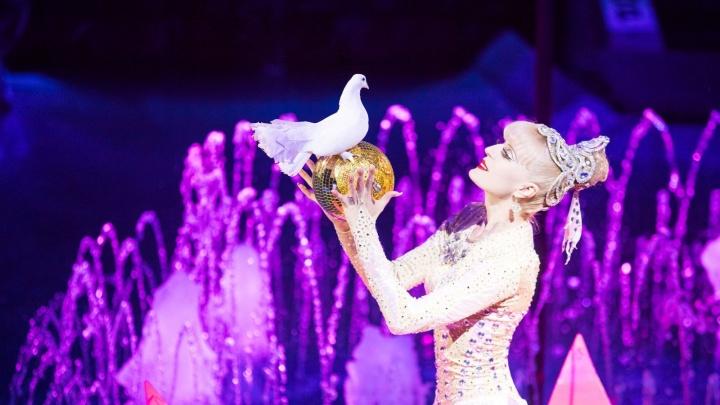 Цирк на воде: уже в эту субботу в Ростове состоится премьера уникального шоу