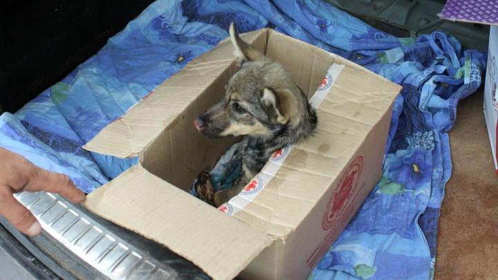 В Омск привезли обгоревшего щенка, которого хозяйка бросила в бак с углями