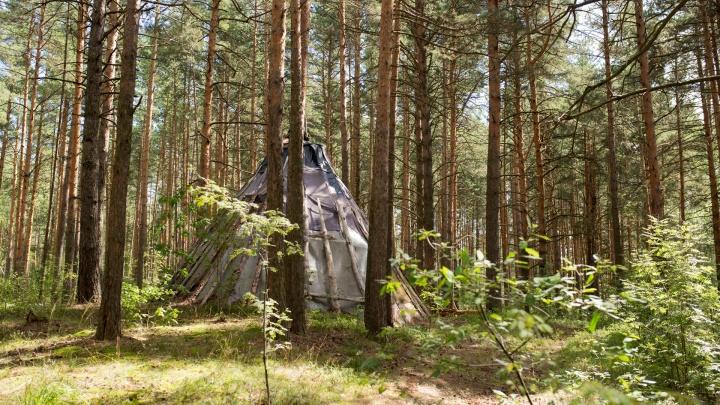 В ярославском лесу обнаружили филиал министерства сатаны: фото и видео
