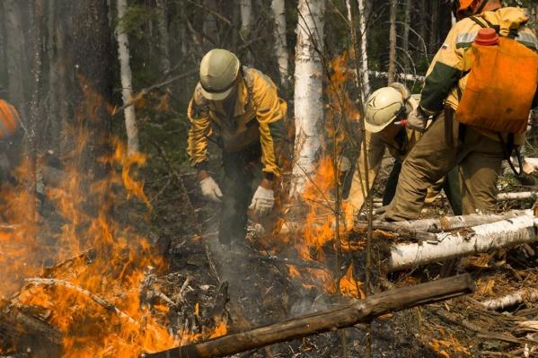 Вчера Федеральная Авиалесоохрана показала, как пожарные тушат лес