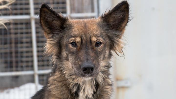 В Самаре экипажи ловцов бездомных животных будут работать круглосуточно