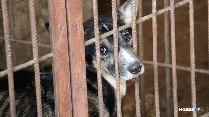 С волонтёров, которые помогают службе отлова бродячих собак, потребовали подписку о неразглашении