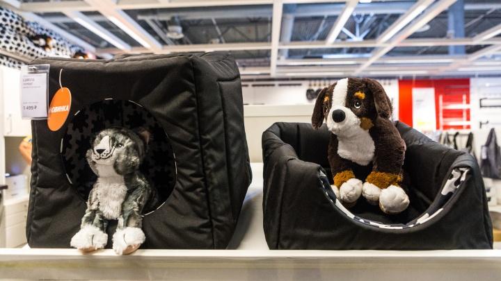 В новосибирской ИКЕА появились дома для кошек и посуда для собак