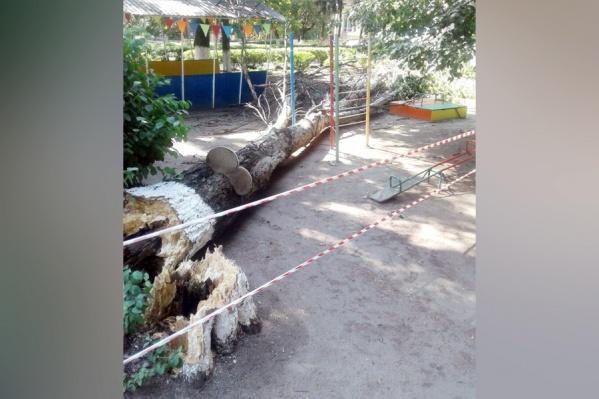 Дерево на площадку упало в выходной день, когда там не было детей
