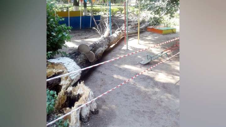 На площадку в ростовском детсаде упало сухое дерево