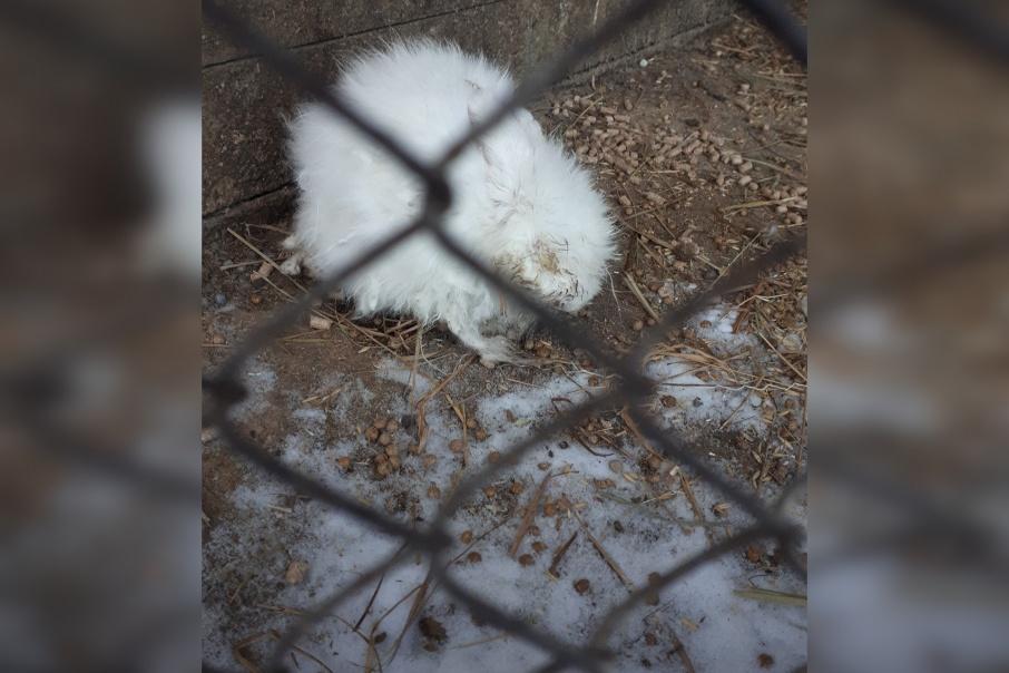 Полуживого кролика оставили на морозе