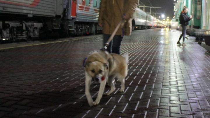 Будущий американец. Пёс Лешик покинул Омск