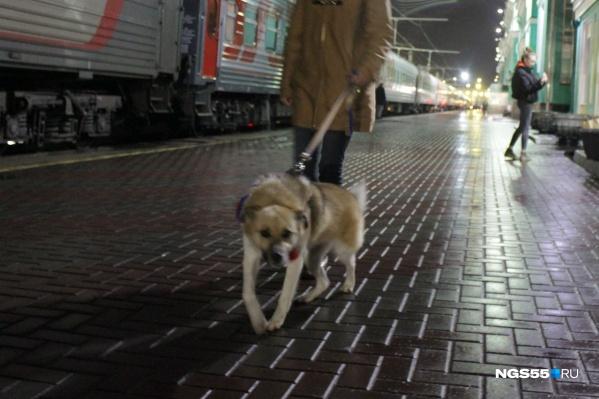 На вокзале Лешик осторожничал и стеснялся. Ему на шею повязали платок в цветах российского флага