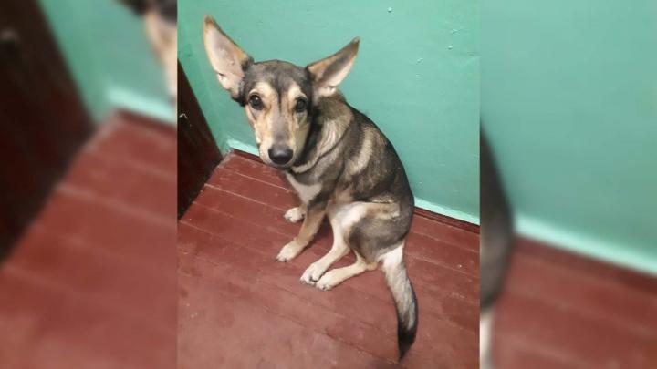 Хозяева усыпили собаку и выкинули во двор: соседи написали заявление в полицию