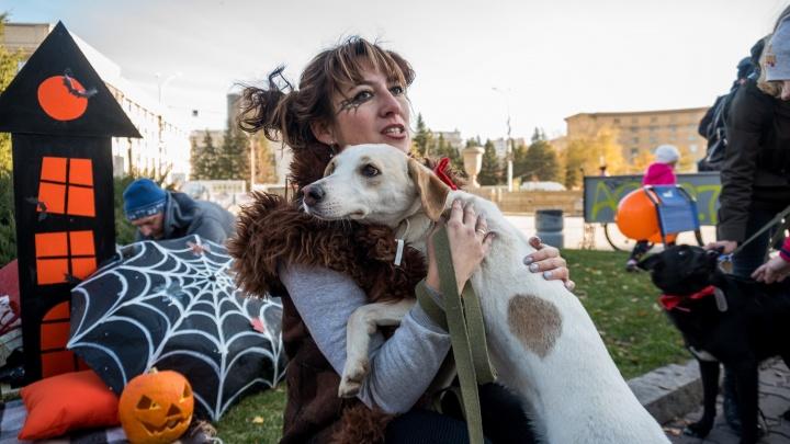 «Любовь даром, сосисочки приветствуются»: новосибирцам дали протестировать ласковых собак