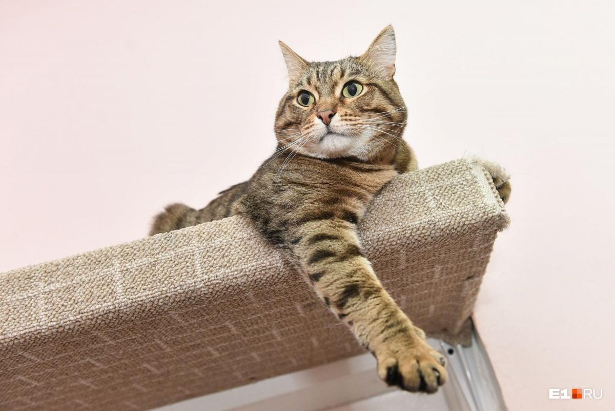 У кота всегда должен быть доступ к воде. В идеале — поилка в каждой комнате, особенно для ленивых котов