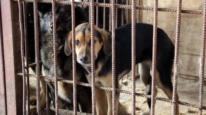 Омское бюджетное учреждение потратило 1,3 миллиона на препарат для убийства бездомных собак