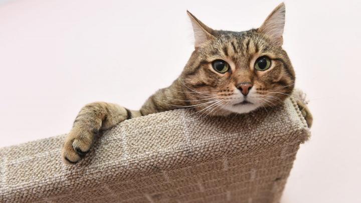 Инструкция E1.RU: какие прививки коту сделают бесплатно и зачем под кожу собаке вживлять чип