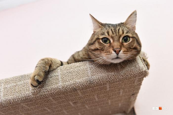 Для котов и собак есть одна обязательная прививка — от бешенства