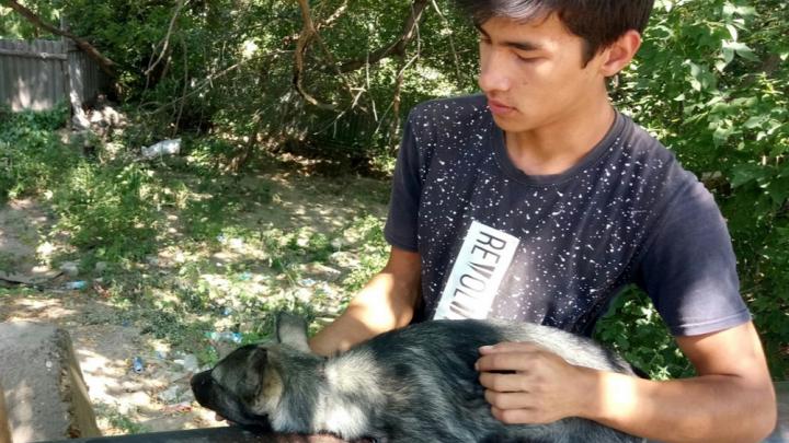 Визжал от страха, когда брали на руки: в Средней Ахтубе спасли от смерти щенка с удавкой на шее