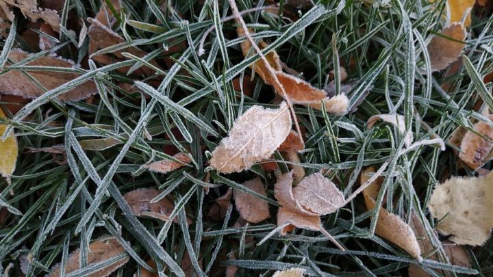 «Дыхание зимы»: первые заморозки покрыли город инеем