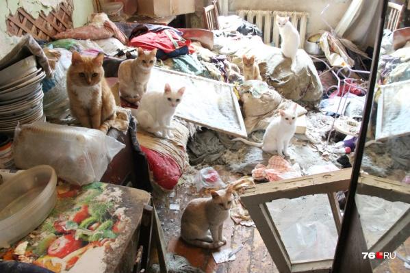 Оставшись без хозяйки, животные навели свой порядок в комнате