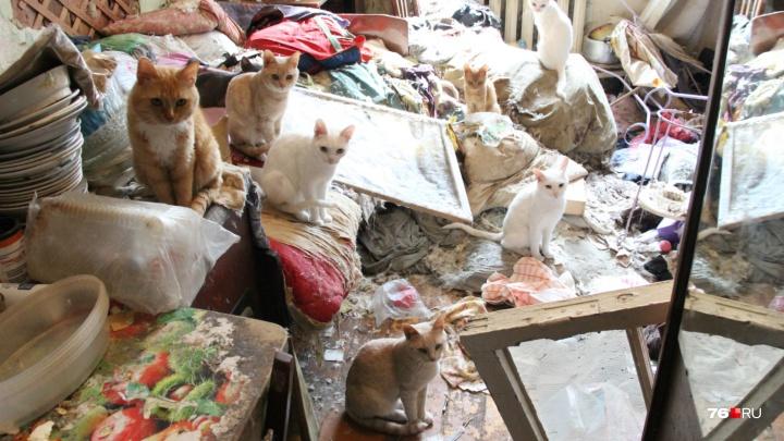 «Никого сюда не пустим, пока всех не раздадим»: в комнате после смерти хозяйки осталось 12 кошек