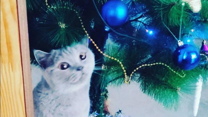 Роды, танцы на морозе и предложение выйти замуж: новогодние каникулы омичей в подборке из Instagram