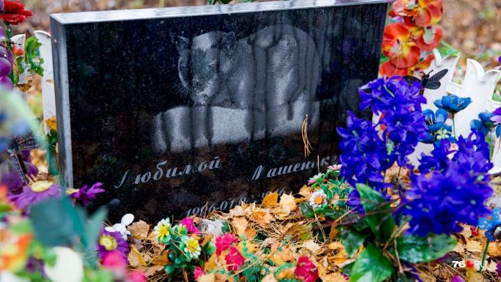 Реинкарнация Мурзика: прокуратура проверит незаконное кладбище домашних животных в Ярославле