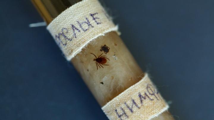 Клещи в городе. Что делать, если тебя или твоего питомца укусил паразит? Полезная инструкция