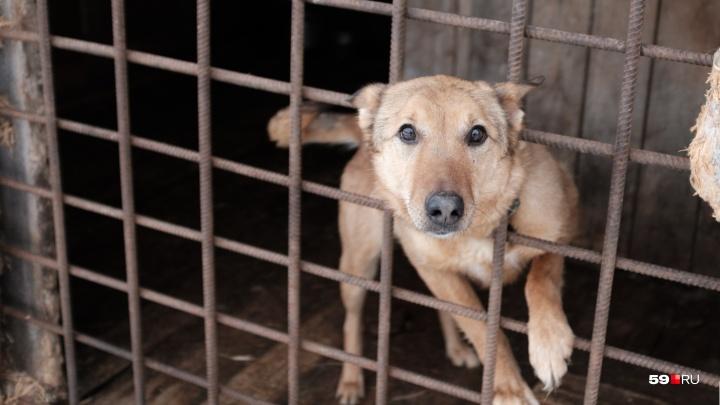 В Перми выберут директора службы по регулированию численности безнадзорных животных