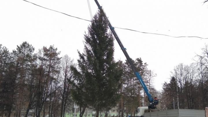 Новогодние ёлки появились на Телецентре и в Дёме