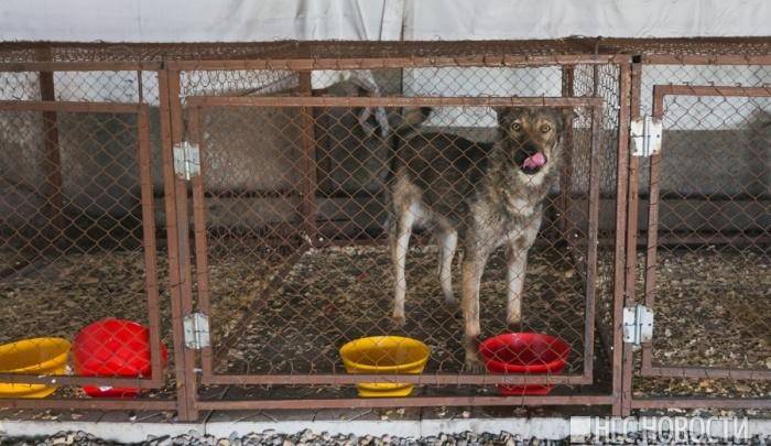Ловцов бездомных собак оштрафовали на 30 тысяч за антисанитарию и отсутствие онлайн-трансляции
