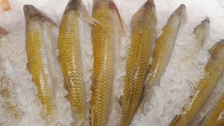 Сотрудники Роспотребнадзора нашли на самарских прилавках рыбу с патогенной микрофлорой