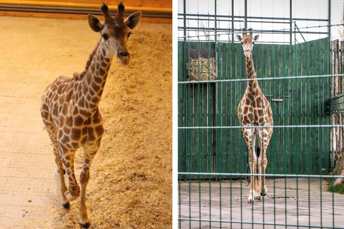 Радуга заметно изменилась за четыре года в зоопарке?