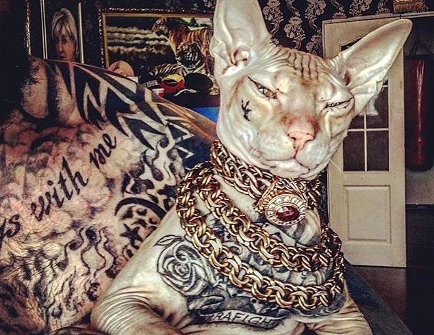 Кот весь в татуировках