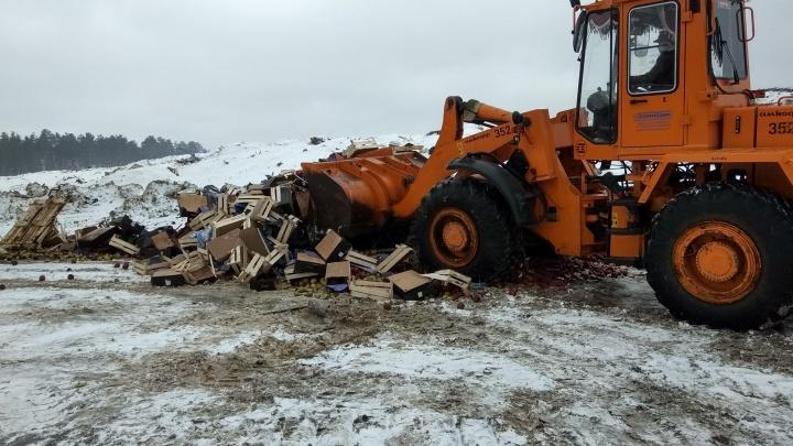В Курганской области уничтожили почти 5,5 тонны санкционных яблок и груш