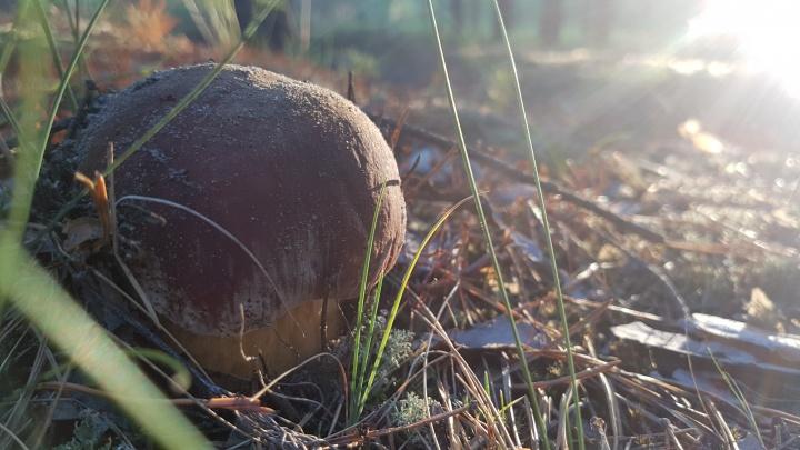 Первый случай отравления грибами: житель Кургана поел маслят