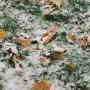 На следующей неделе в Тюмени выпадет первый снег