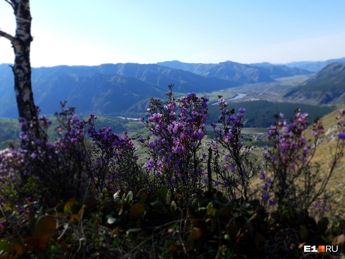 В мае цветет маральник, в остальные месяцы его нет. Это вид с вершины Верблюда