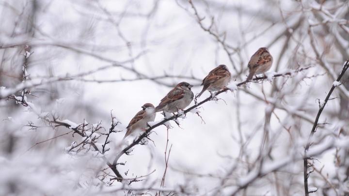В начале недели в Екатеринбурге будет идти мокрый снег и дуть порывистый ветер