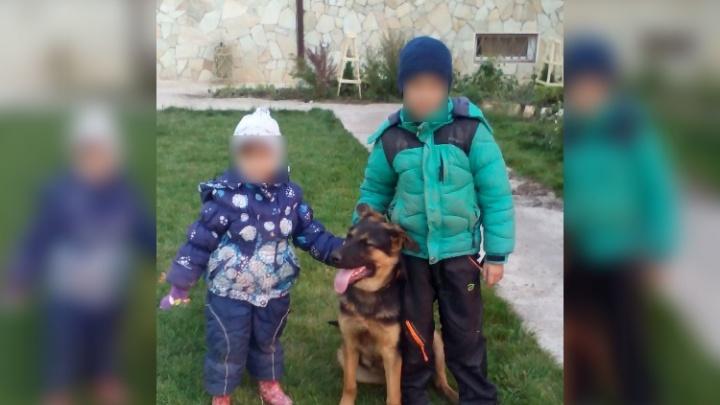 В Башкирии ищут собаку погибшего в ДТП мальчика