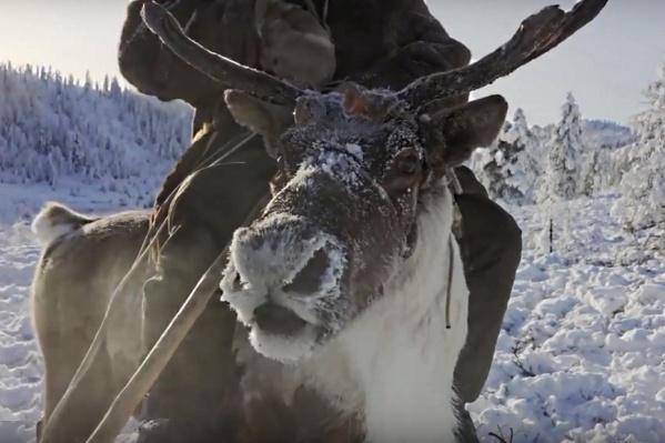 В фильм «Великий Северный путь» попали кадры с плато Путорано, которое находится на севере Красноярского края