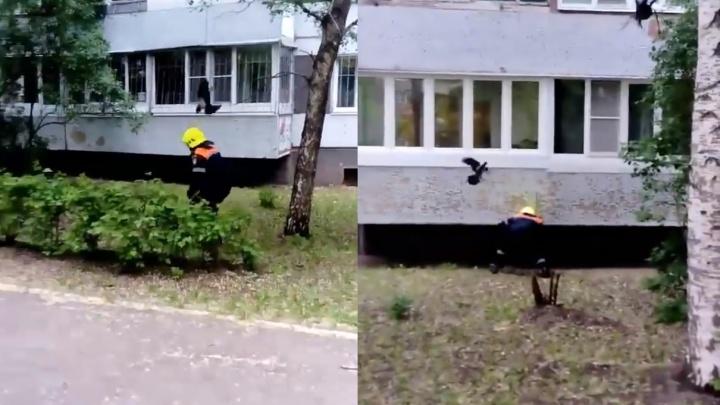«Как взбесились!»: в Самарской области вороны нападают на людей