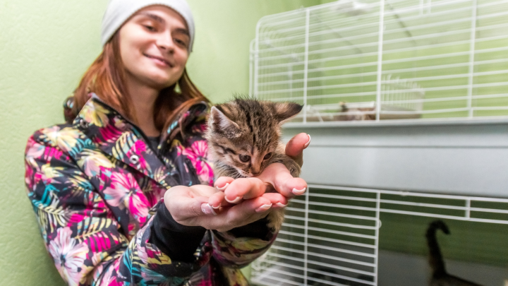 «Кошкин дом»: куда самарцам сходить в гости к животным