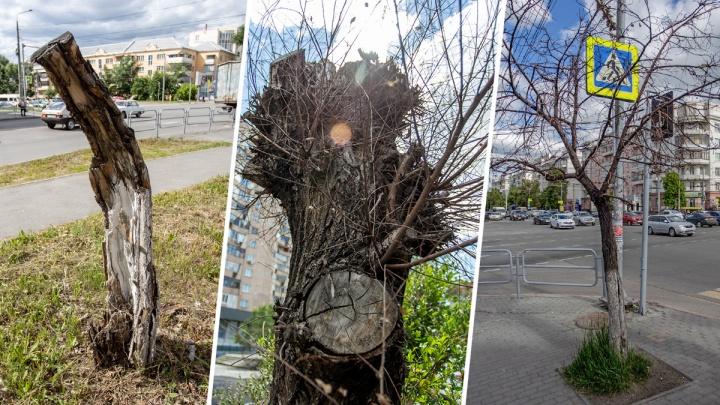 И так сойдёт: смотрим, как в Челябинске «рубят зелень» на обрезке деревьев и уродуют город