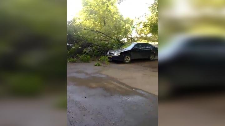 В Уфе дерево упало на припаркованную машину