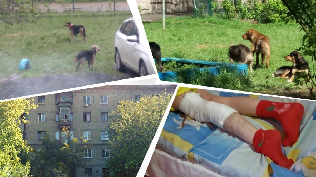 Прохожие отбили искусанную девочку у этой своры собак