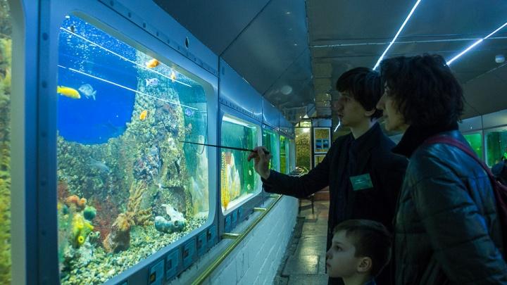 В Омске детей будут бесплатно учить ухаживать за рыбами